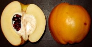 Un frutto di Chaenomeles  spp. sezionato.