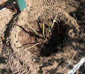 Il tornello per l'annaffiatura della pianta.