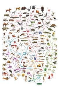 L'albero dell'evoluzione.