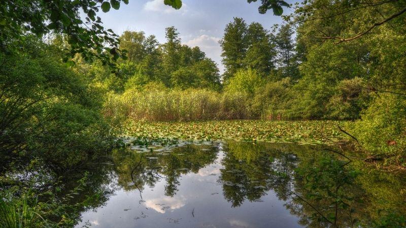 Foto dell'oasi con lago e flora rigogliosa